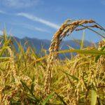 収穫逓増 収穫逓減 グラフ