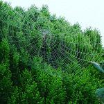 クモの巣理論 安定